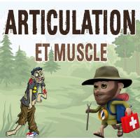 Articulation et Muscle